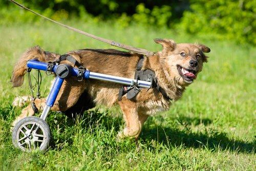 장애가 있는 동물을 입양하는 것에는 더 큰 책임감이 필요하다