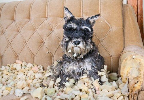 개가 스트레스를 받고 있다는 7가지 신호