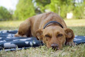 개가 밤새 잠을 잘 자도록 하는 5가지 방법