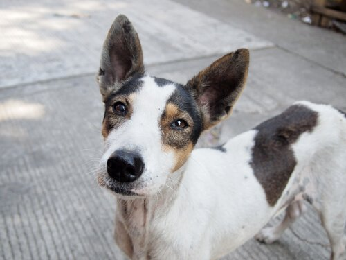 개 입양을 장려하는 캠페인