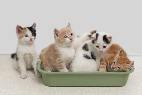 고양이 모래 화장실의 냄새를 제거하는 7가지 방법