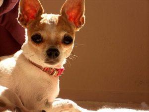 반려견이 강아지에서 개로 성장하는 시기