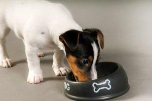개에게 먹이를 줄 때 하는 4가지 실수