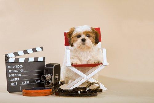 개는 텔레비전을 볼 수 있을까?