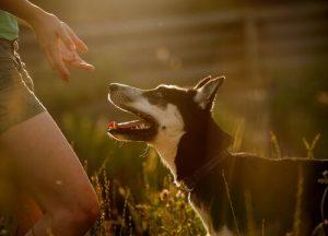 개가 주인을 물려고 하는 이유