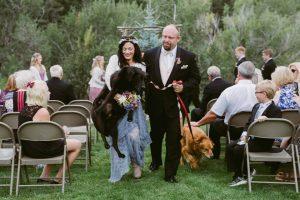 뇌종양에 걸린 개가 주인의 결혼식 후에 맞이한 죽음