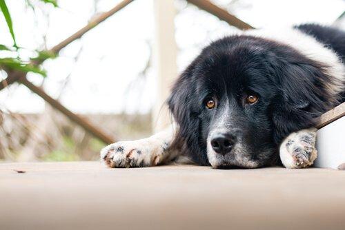 개를 힘들게 하는 지루함에 주의하자