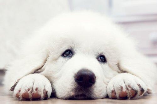 개 입양에 관한 단편 영화: 입양되기 위해 개들은 무엇을 할까?