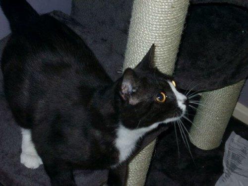 런던에서 실종된 후 8년 뒤 파리에서 발견된 고양이, 문유닛