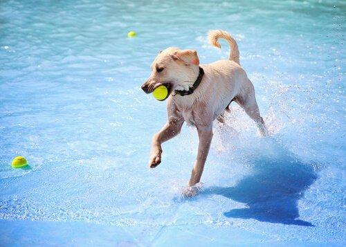 마드리드에 개장한 최초의 개 수영장
