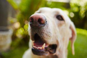 개는 왜 하품을 할까?