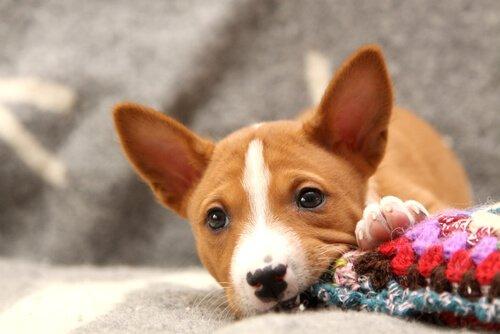 강아지가 물건을 물어뜯는 경우에 어떻게 할까?