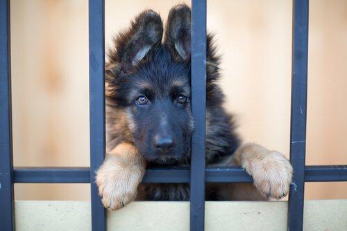 강아지 입양은 사랑에 대한 투자