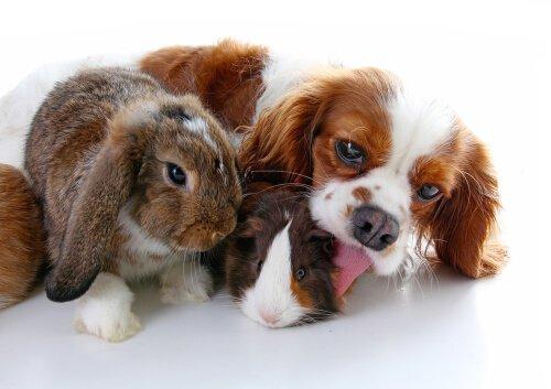 함께 키울 수 없는 동물은 어떤 동물들일까? 개와 토끼