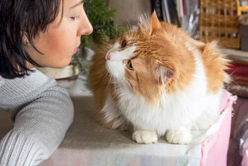 고양이가 당신을 사랑하는지 어떻게 알 수 있을까?