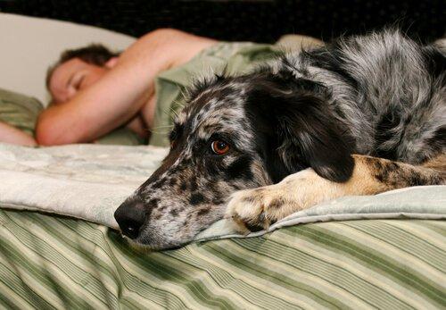 숙면을 취하고 싶다면 개를 입양하자