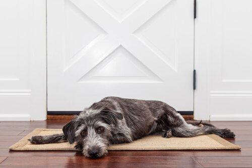 개가 혼자 있을 수 있는 시간은 어느 정도일까?