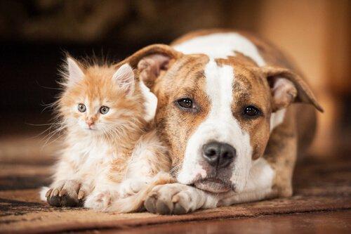 반려동물에게 가장 위험한 질병 7가지