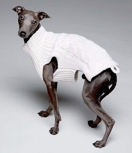 아돌포 도밍게즈 스페인 의류 브랜드가 개를 위한 컬렉션을 선보이다