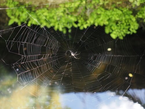 집 안의 거미를 절대 죽여서는 안 되는 이유