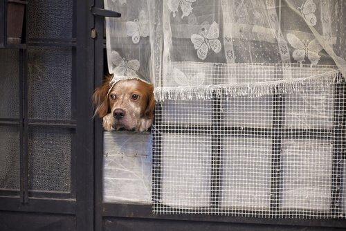 개는 며칠간 혼자 있을 수 있을까?