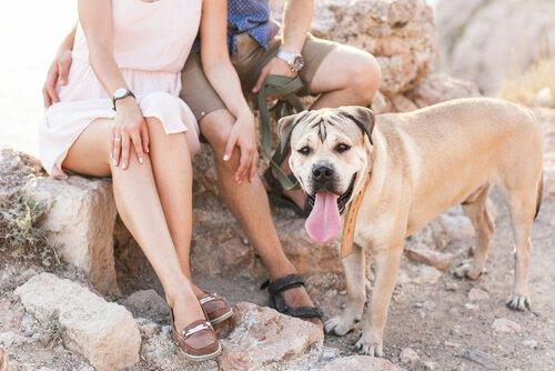 개와 함께 살면 좋은 점 5가지