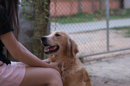 개가 인간의 언어를 이해할 수 있을까?