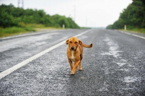 개를 구하기 위해 공중으로 점프한 레이싱카