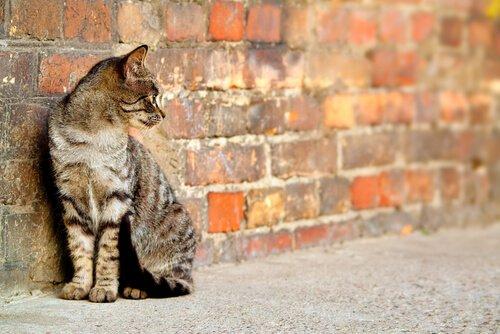 길 고양이