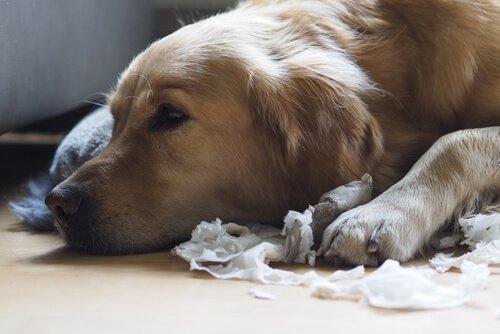 개가 집 안을 난장판으로 만들지 않도록 하는 팁 5가지