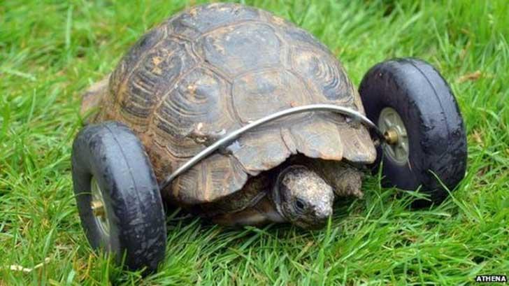 바퀴 달린 거북을 만나보자