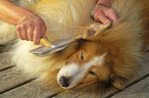 무의식적으로 개를 학대할 수도 있을까?