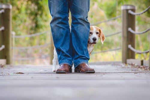 소음 공포증이 있는 개를 돕는 방법