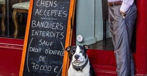 펫 프렌들리: 개는 받지만 은행원은 받지 않는 파리의 어느 식당