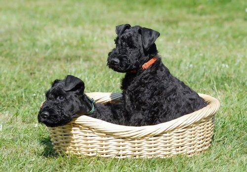 오즈의마법사-토토 가장 유명한 개들에게 바치는 오마주