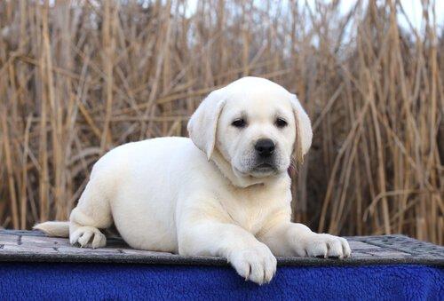 휴지 모델 강아지 가장 유명한 개들에게 바치는 오마주
