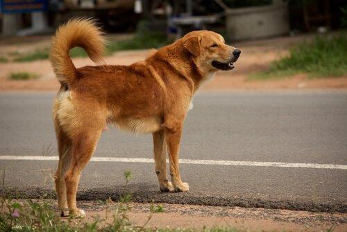 개에게 길 건너는 방법 가르치기