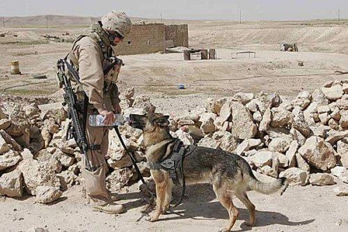 아프가니스탄 군인과 개의 우정 이야기