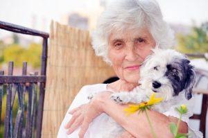 노년에 개를 키우는 것의 이점