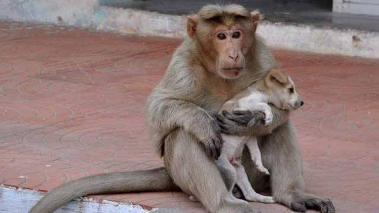개를 돌보는 원숭이