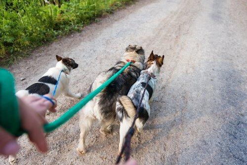 개 산책 아르바이트로 용돈을 벌어보자
