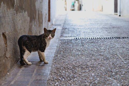 고양이가 집을 나갔다가 다시 돌아오는 이유는?
