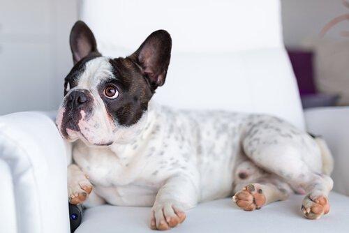 개는 TV에서 무엇을 볼까?