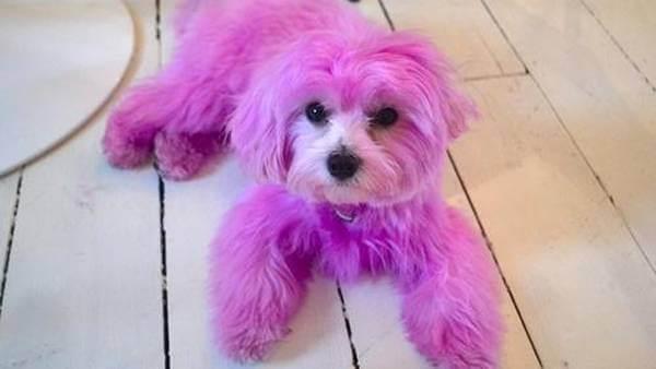 경찰이 개를 염색한 사람을 찾아 나서다