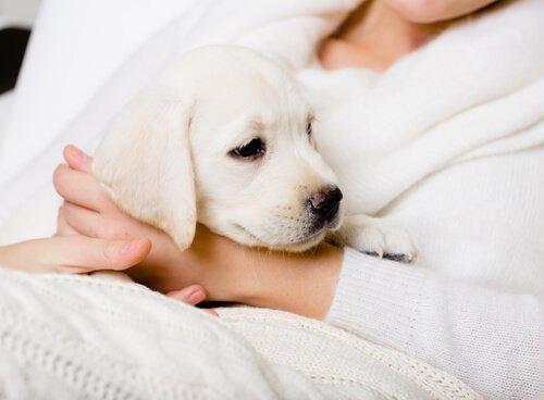개를 사랑하는 사람들에게 해서는 안 되는 말