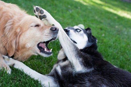 개들의 싸움을 말리는 올바른 방법