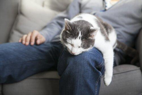 고양이와 자면 좋은 점 5가지 고양이의 수면