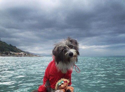 진정한 바다 개, 너바나를 만나보자