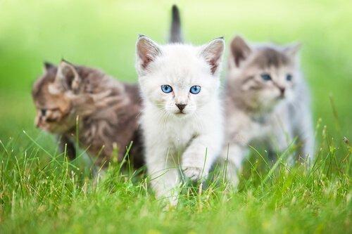 고양이가 주인을 닮은 이유는 무엇일까?