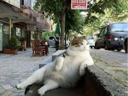 이스탄불의 유명한 고양이, 톰빌리